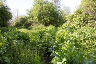 the wild place is full of comfrey and other good sources of bee food
