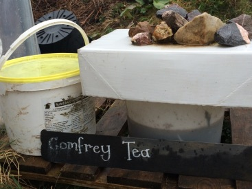 Their comfrey tea making buckets