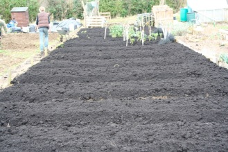 The allotment resembling a chocolate cake!