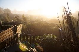 allotment sunrise