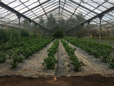 Weed suppressing membrane helps reduce the workload
