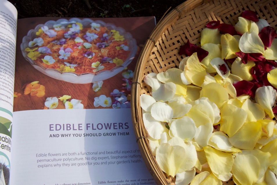 Rose petals and my article