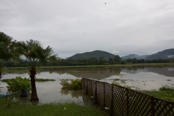Flooded gardens and rice fields
