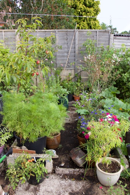Small Forest Garden In Pots