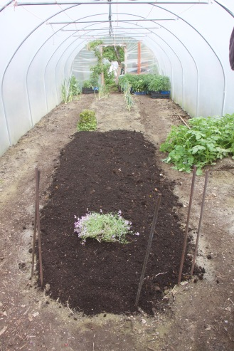 Then we mulched with my homemade compost