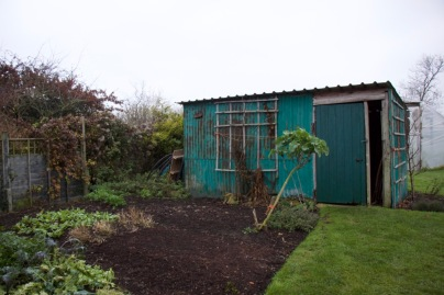 metal shed and organic no dig beds