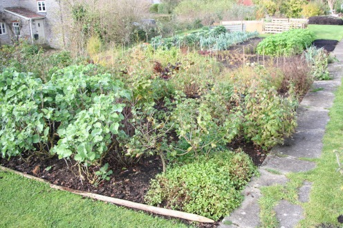 nov142 view of perennials & exp