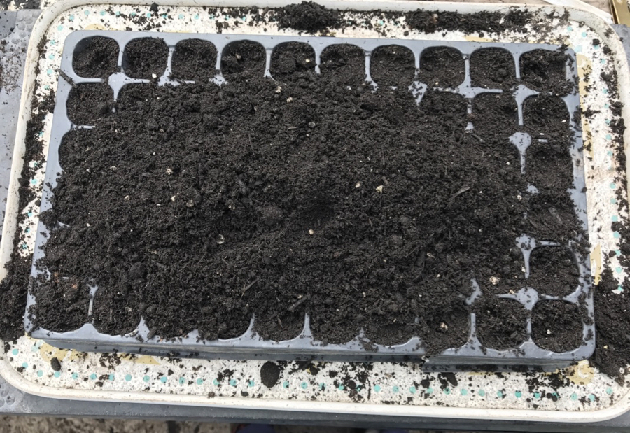 fill the modules with compost