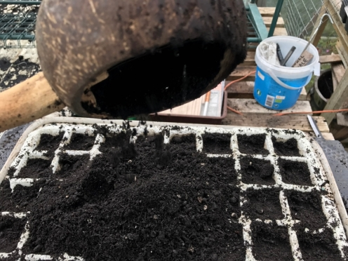 fill with compost, firming down and refilling until it is ready