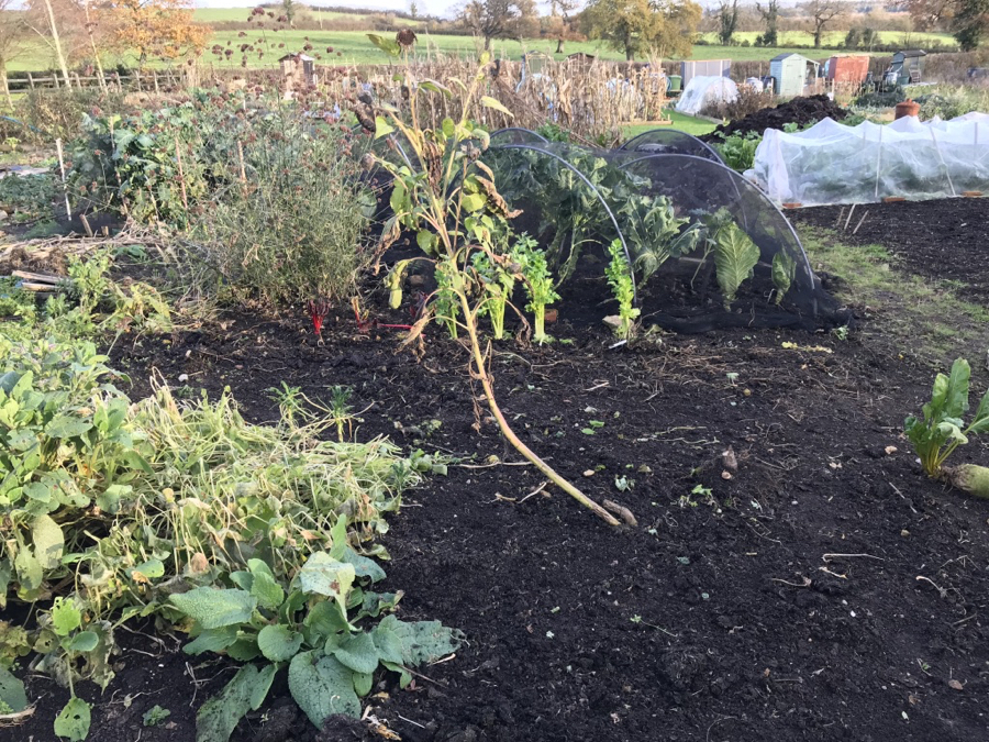 No Dig Allotment November Update