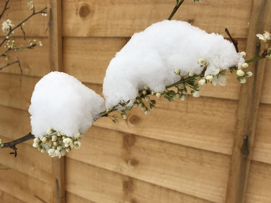 Walking in a winter wonderland … in March… again!