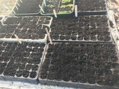module trays full of seed