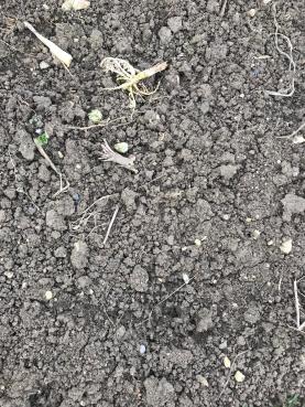 another dug plot