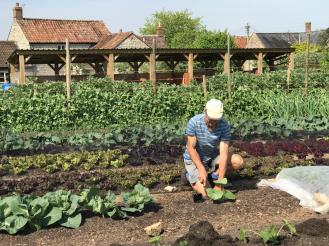 Charles planting a squash at Homeacres