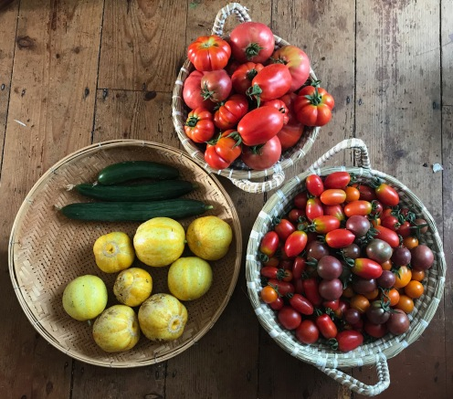 tomatoes, cucumbers and Crystal Lemon cucumbers