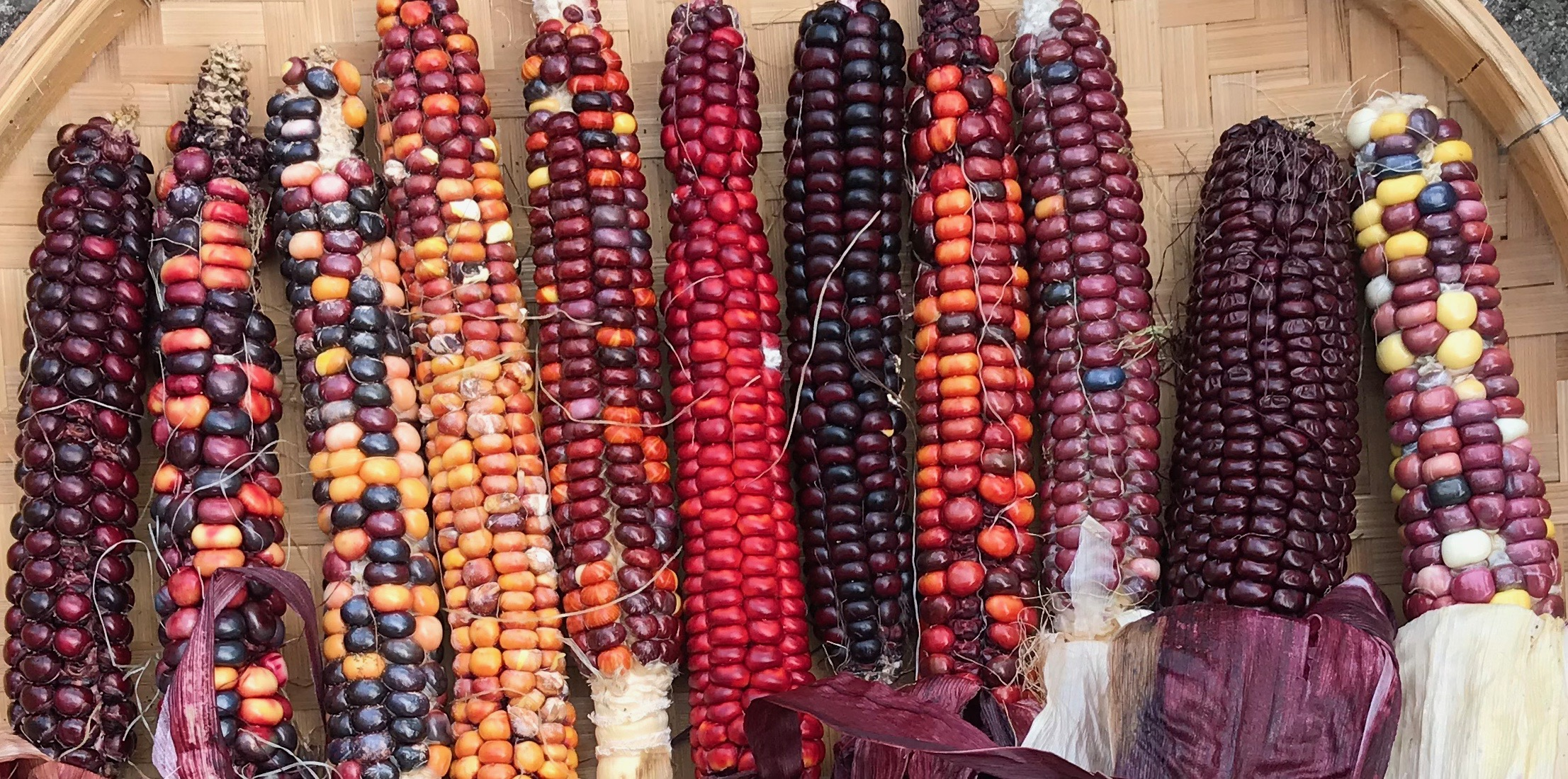 September sowing, sweetcorn harvests and recipes